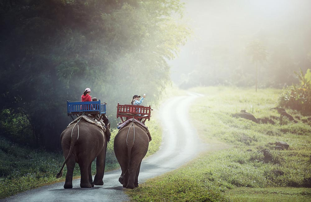 1 day Elephant ride and Biking adventure Luang Prabang Elephant Park Project, Elephant Village